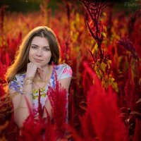 Амаранта :: Мадина Скоморохова