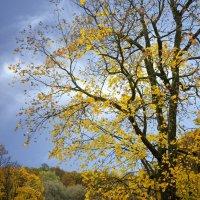 золотая осень :: ник. петрович земцов
