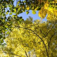 осень :: Андрей Гр