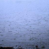 Дождик :: Надежда Смирнова