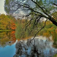 Чарующая осень... :: Sergey Gordoff