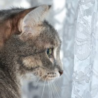 За окном дождь... :: Наталья Жукова