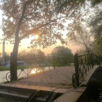 утро в парке :: Елена