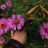 Цветы запоздалые :: Андрей Лукьянов