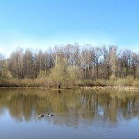 настоящая весна! :: Анна Воробьева