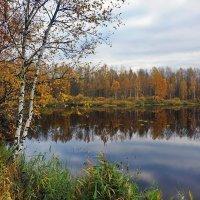 Осенний этюд. :: Юрий Шувалов