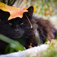 Осенний кот :: Юрий Ричка