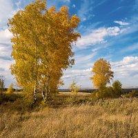 Золотая осень :: Любовь Потеряхина
