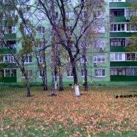 Октябрь в Люберцы пришёл. :: Ольга Кривых