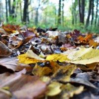 Осень... И листьев шорох под ногой... :: Марина
