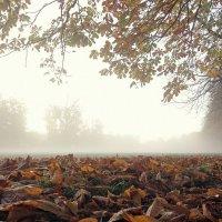 По туманному парку :: Alexander Andronik
