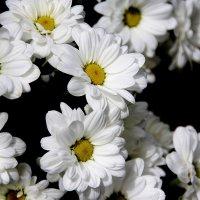 ЦВЕТЫ...  просто  цветы... :: Валерия  Полещикова