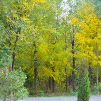 Природа в октябре... :: Тамара (st.tamara)