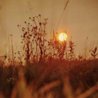 У осеннего солнышка тоже Свет ласкающий, тихий такой. :: Ирэна Мазакина