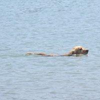 все любят купаться в море :: tgtyjdrf