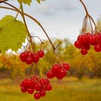 Осенние бусинки :: юрий Амосов
