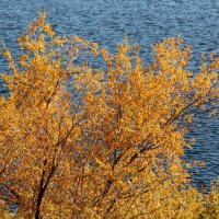 Осень на Волге :: Dr. Olver