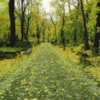 Осень :: Андрей Маталин