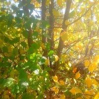 Желто- зеленая роскошь листвы :: Kira Martin
