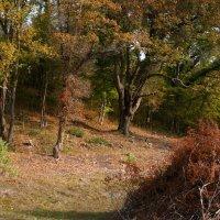 Виден уход за деревьями :: Валерий Дворников