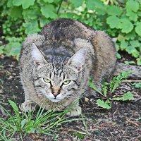 Кошка :: Сергей Мухин