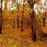 осенний лес :: Александр Прокудин