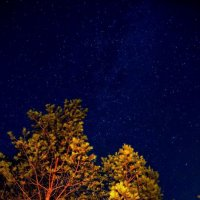 Ночь! :: Натали Пам