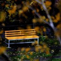 Желтая скамейка. :: Валерия  Полещикова