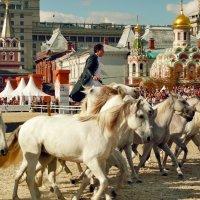 Белые Кони Авалона :: Vera Ostroumova