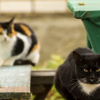 Коты и кошки :: Александр