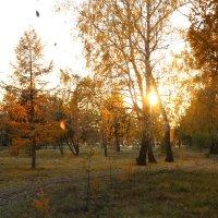 Золотая осень :: Марина Щуцких