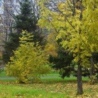Зелёный уголок в осеннем парке. :: Татьяна Помогалова