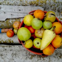 Небольшой осенний урожай :: Татьяна Королёва