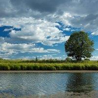 Одинокий дуб на берегу озера :: Александр Синдерёв