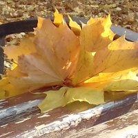 Осенний этюд :: Мария Климова