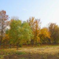 """Бабье лето"" в октябре... :: Тамара (st.tamara)"