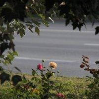 Городские цветы :: Владимир Марков
