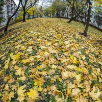Осенняя планета :: Игорь Герман