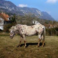 гуляют там животные невиданной красы :: Elena Wymann