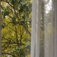 Как из моего окна осень желтая видна :: Людмила Волдыкова