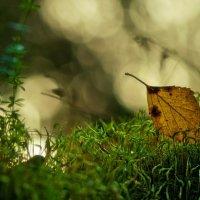 лесные зарисовки... :: Natali-C C