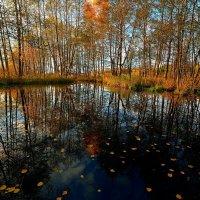 Осеннее :: Николай