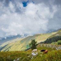 На уровне облаков :: Ирина Никифорова