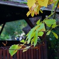 Еще одна осень.... :: Екатерина Торганская