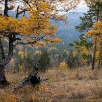 Осенний лес... :: Николай