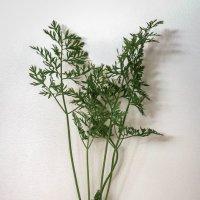 dualistic carrots :: Leha F