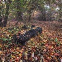 Осенними тропами :: Никита Юдин
