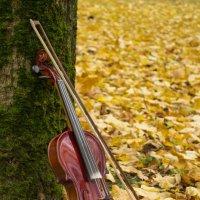 Скрипка осени :: Юлия Фалей