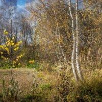 Природа в октябре. :: Владимир Буравкин