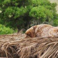 И в деревне поспать не дают :: M Marikfoto